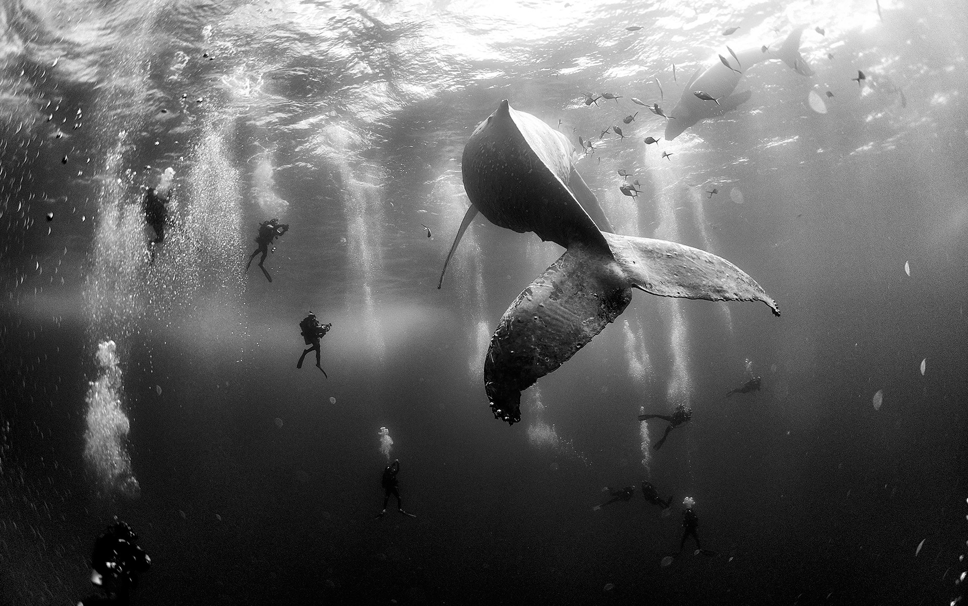 121-102331-underwater-in-black-and-white